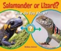 Salamander or Lizard?